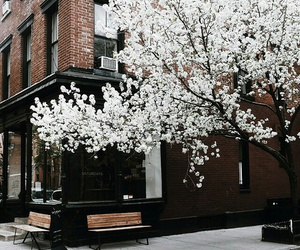 flowers, tree, and white image