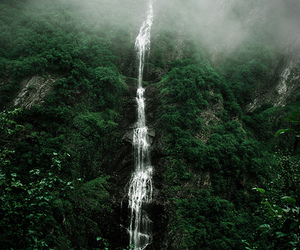forest and waterfall image