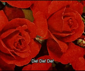 rose, die, and red image
