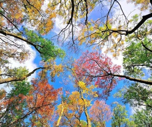 autumn, clouds, and sky image