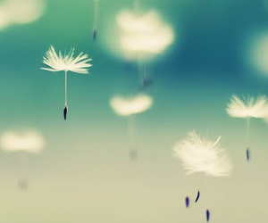 dandelion, photography, and floating image