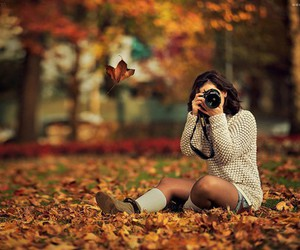 autumn, leaves, and wild image
