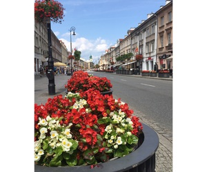 flowers, Poland, and summer image
