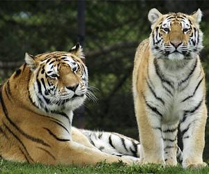 supershot, anawesomeshot, and tigri image