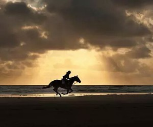 equestrian and horseriding horse image