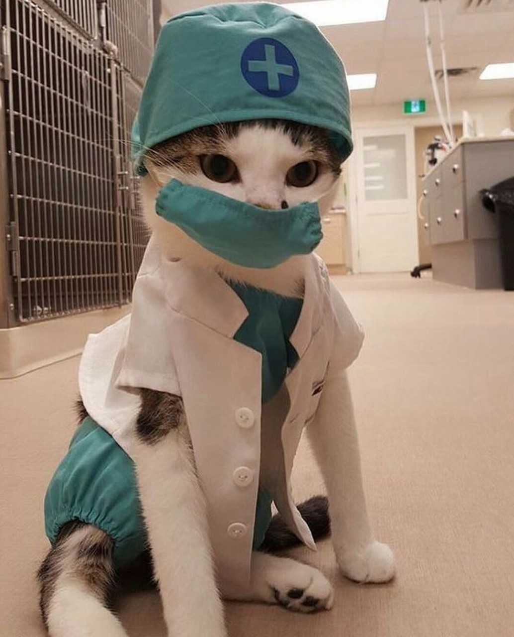 cat, doctor, and animal image
