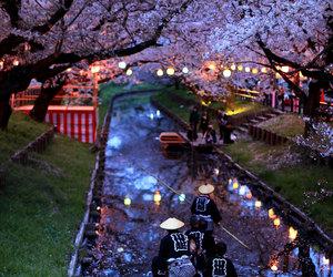 japan, travel, and sakura image