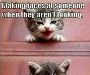 cat, funny, and face image