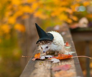 autumn, Halloween, and hedgehog image
