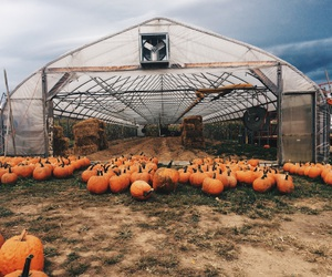 autumn, dark, and farm image