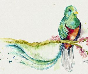 bird, blue, and quetzal image