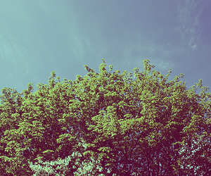 blue, summer, and tree image