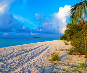 beach, summer, and ocean image