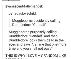harry potter, funny, and gandalf image