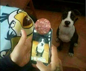 funny, animals, and dogs image