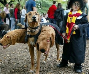 harry potter, dog, and costume image