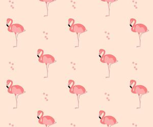 flamingo and pink image