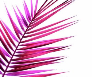 indie, palms, and pink image