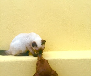 cat, cats, and dog image