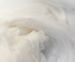 white and tulle image