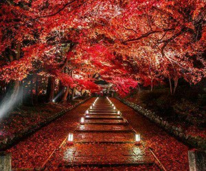 autumn, japan, and red image