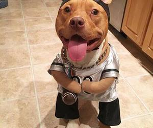 pitbull and cute image
