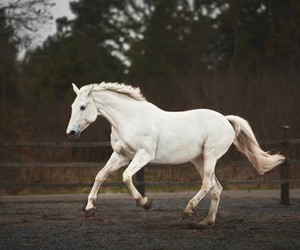 beauty, white, and equine image