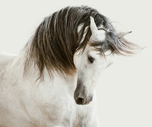 awesome, equine, and horse image