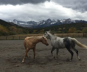horses, mountains, and sky image