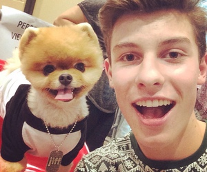 shawn mendes, dog, and shawn image