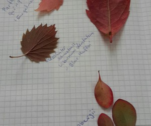 autumn, Herbst, and blätter image