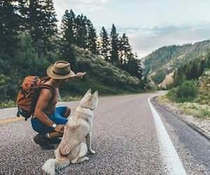 dog and travel image