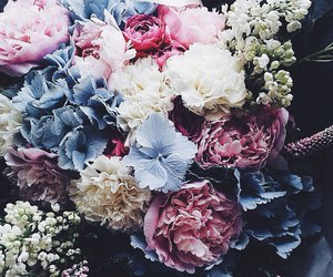 flowers, spring, and south. image