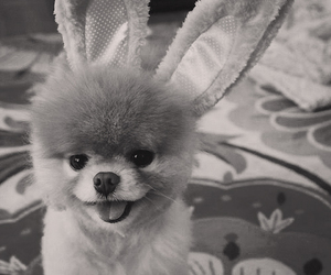 dog, rabit, and cute image