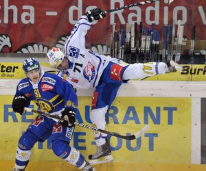 Action, hcd, and zsc lions image