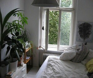 plants, room, and bedroom image