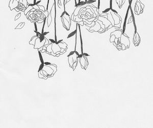 flowers, rose, and drawing image