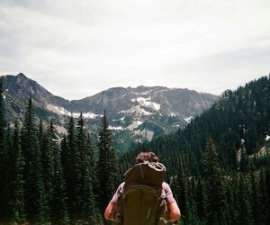 adventure, travel, and forest image
