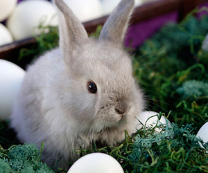 bunny, easter, and egg image