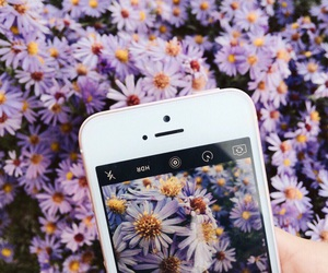 flowers and iphone image