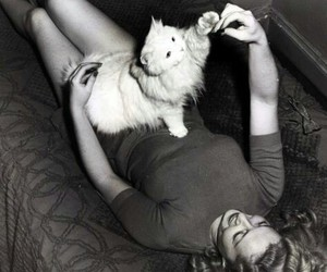 cat, marylin monroe, and cute image