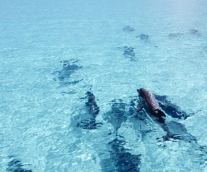 ocean, dolphin, and summer image