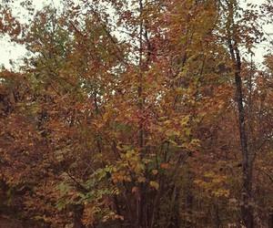 autumn, cabin, and october image
