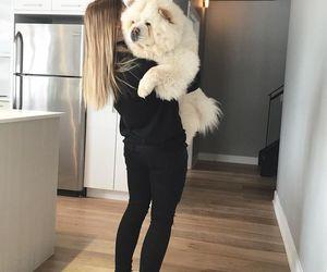 animals, Chow, and dog image