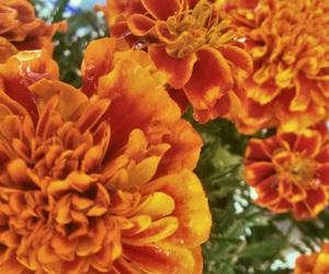dia de muertos, flowers, and orange image