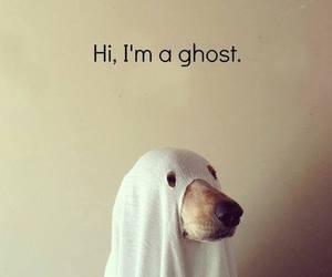 animal, dog, and dress up image