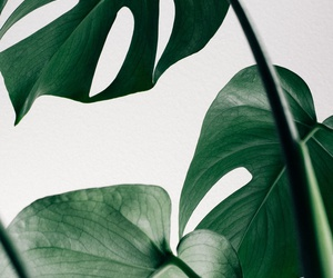 green, plants, and wallpaper image