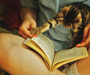 book, kitten, and educate meh image
