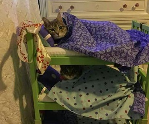 animals, kittens, and photo image