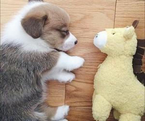 adorable, animal, and corgi image